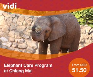 Full Day Elephant Care Program